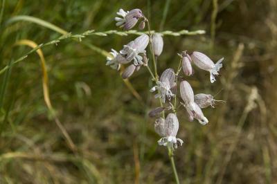 Fotoalbum Insekten und Pflanzen