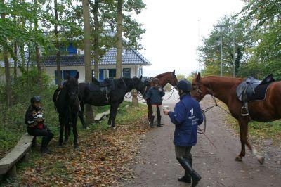 Foto des Albums: Ostseetour 2008 mit dem Reit- und Fahrverein Beetzsee (17.10.2008)