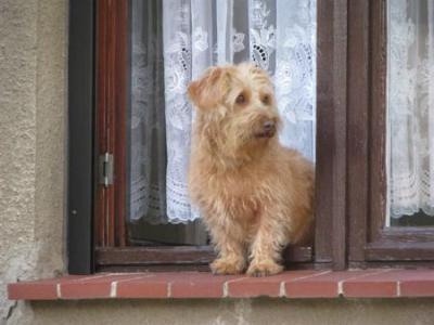 Fotoalbum Hundepension