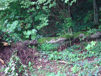 Fotoalbum Baum zerstört Tor im Waldstadion