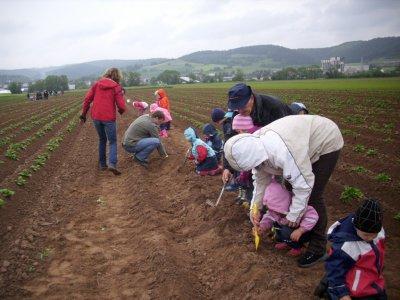 Fotoalbum Kartoffel setzen in der Kita Heinebach (Sept. 2011)
