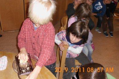 Fotoalbum Salzexperiment in der Kita Baumbach - Warum wird die Kartoffel schlapp?