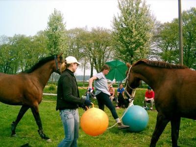 Foto des Albums: Gelassenheitstraining (03.06.2006)