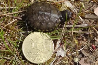 Fotoalbum Einsetzen der Schildkröten