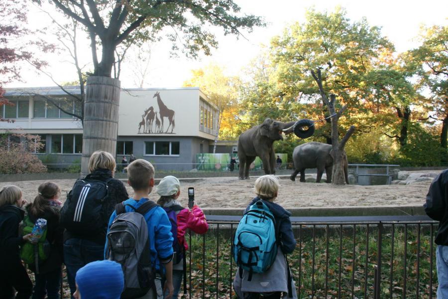 Foto der Galerie: Fanfarenzug Potsdam - Wilde Tiere unter blauem Himmel
