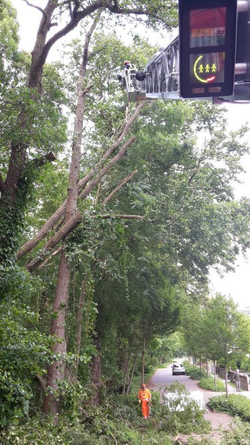 Foto der Galerie: Baum droht auf Straße zu stürzen 13.06.2017