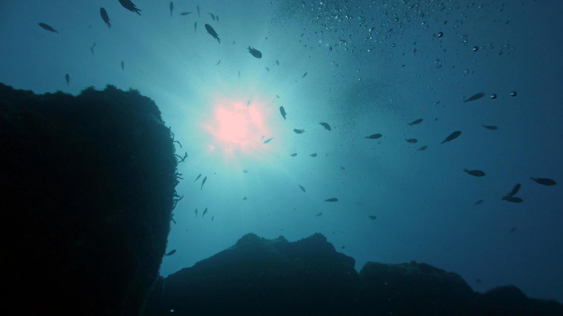 Foto der Galerie: GEMMA DAUCHA 7 – 17 Neptunianer auf Madeira