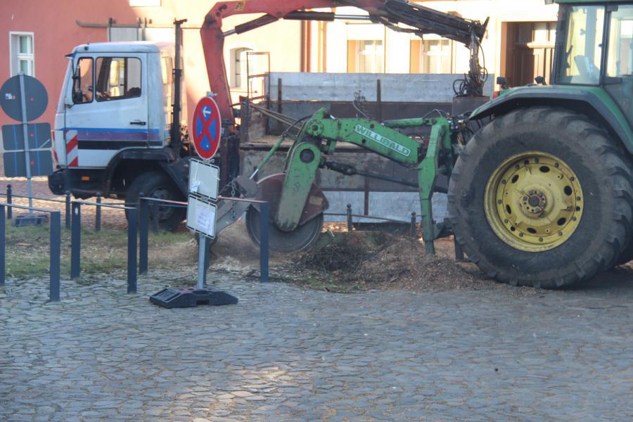 Foto der Galerie: Ein Baum am Kirchplatz Kremmen muss fallen,  11.02.2014