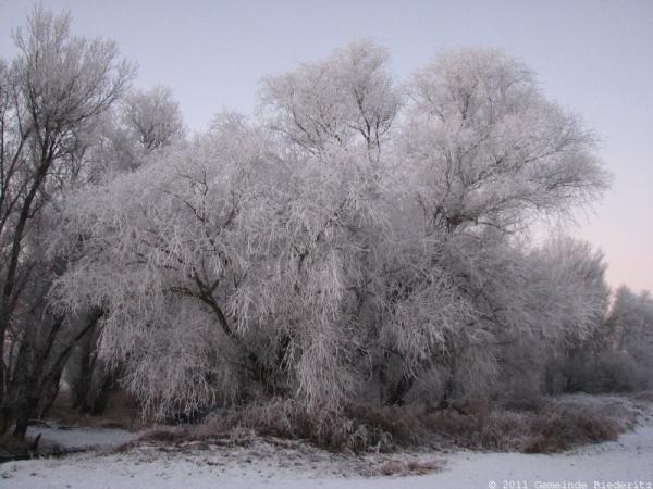 Foto der Galerie: Winter an der Ehle