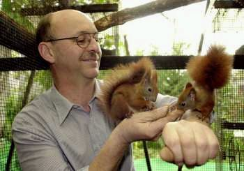 Europäische Eichhörnchen
