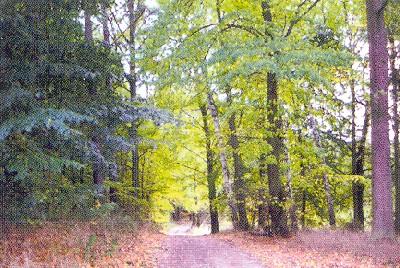 Waldidylle bei Groß-Kölpin