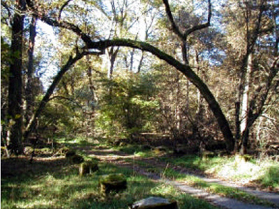 Tor zum Lindenwald