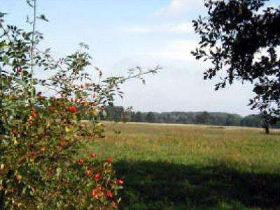 Zwischen Burgstall und Uchtdorf