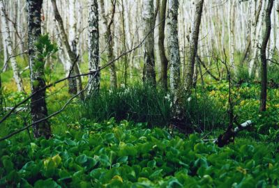 Holländer-Moor im Sehlsdorfer Forst