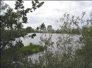 alte Elbe zwischen Heinrichsberg und Loitsche