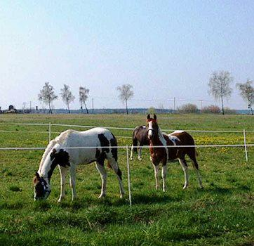 Pferde bei Liebersee