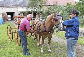Pferde in Beiersdorf auf dem Hof Bär