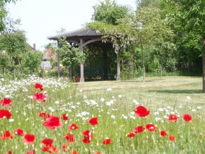 Blick in den Wangeliner Garten