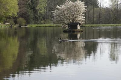 Waldsee am Freizeitzentrum