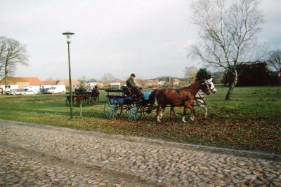 Reitsport in Halenbeck