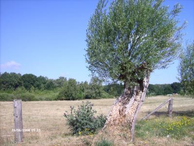 Weide