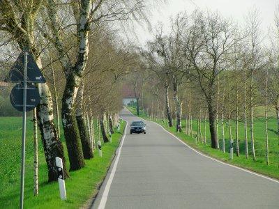 Birkenallee zwischen Wilhelmshof und Mankmoos