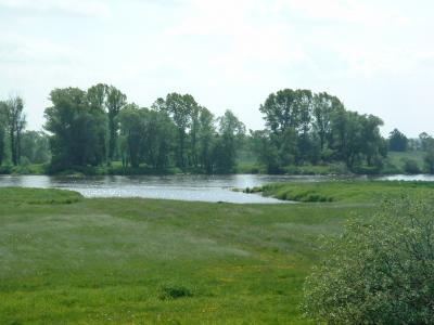 Die Oder aus Sicht des Oder-Neiße-Radweges