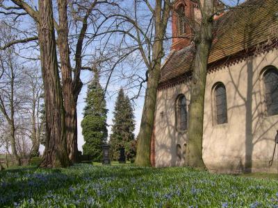 Frühlingserwachen an der Butzower Dorfkirche