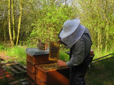 Honigwerkstatt mit Bienenlehrpfad