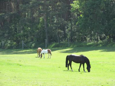 Pferdehof Metzke