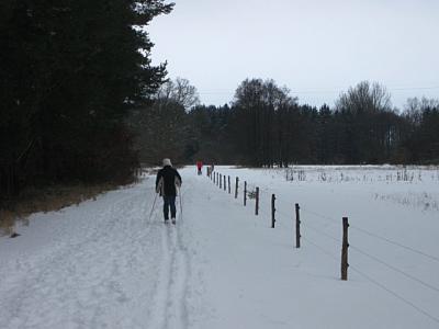 Das Bild zeigt einen befestigten Spazierweg der  wunderschön zugeschneit ist. Rechts sieht man das mit einem Elektrozaun abgetrennte Weidegebiet Schottischer Hochlandrinder