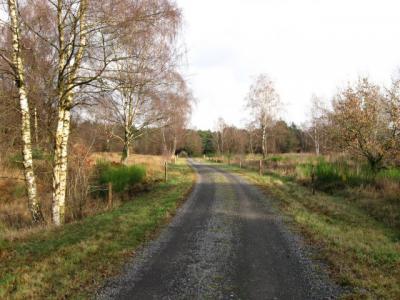 Das Bild zeigt einen befestigten Spazierweg. Rechts sieht man Schottische Hochlandrinder, deren Weidegebiet mit einem Elektrozaun abgetrennt ist.