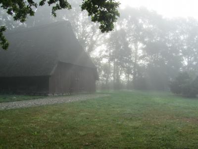 Verwunschen auf einer großen Wiese am Waldrand