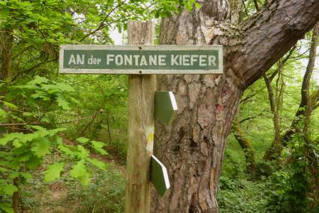 An der Fontane Kiefer, Foto: Gemeinde Grünheide
