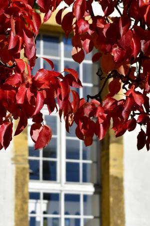 Christian_Raschke_Detailaufnahme Herbst vor der Kirche in Pferdingsleben