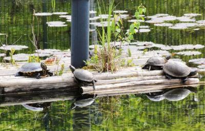 schildkrötengehege