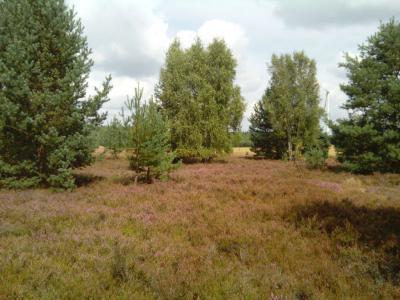 unsere schöne Heide