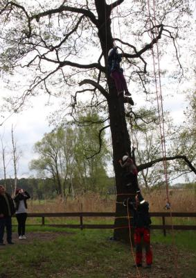 Baumklettern für 1 Tag Kletterpark errichtet in Wahrenbrück