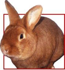 Bild: kaninchenzucht.de