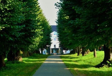 Allee zum Schloss Groß Schwansee