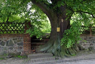 Linde in Settinchen - Naturdenkmal