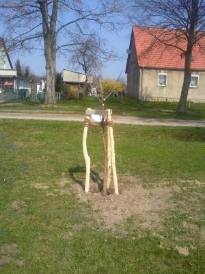Foto zu Meldung: Schönfelder Schule