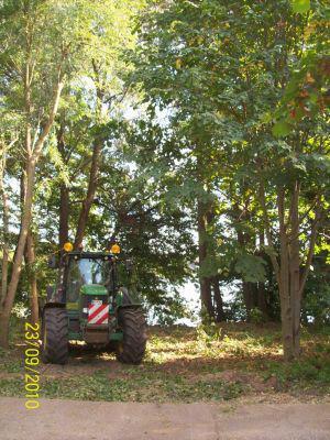 Foto zu Meldung: Trauer um unnötige Baumfällungen