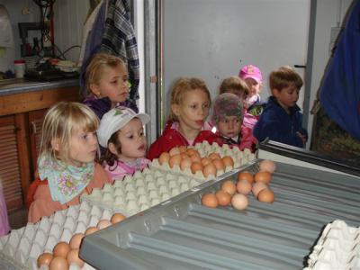 Foto zur Meldung: Sportkita Falkensee: Mit 1700 Hühnern im Hühnerstall