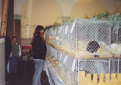 Foto zur Meldung: Kaninchenausstellung in Wiepersdorf
