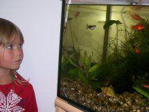 Foto zur Meldung: Die Aquarienwelt entdecken
