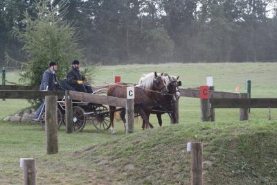 Foto zur Meldung: Jahresrückblick 2008 des Reit- und Fahrvereins Gutshof Behlendorf