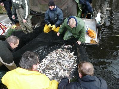 Foto zur Meldung: Fischen mit dem Zugnetz
