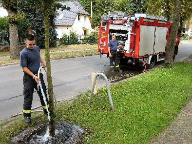Foto zur Meldung: Durststrecke für Falkenseer Straßenbäume