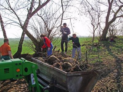 Foto zu Meldung: Gölsdorf: Viele Hände machen der Arbeit schnell ein Ende